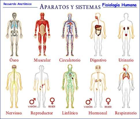 Anatomía y Fisiologia del Yoga, swami maitreyananda, Yoga, Revista ...